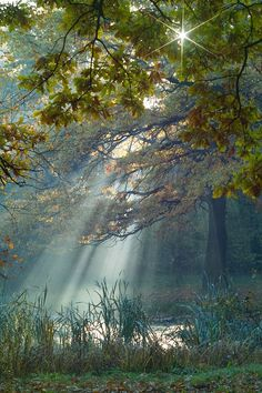 Un claro en el bosque (a clearing in the forest) All Nature, Amazing Nature, Amazing Grace, Beautiful World, Beautiful Places, Beautiful Scenery, Beautiful Forest, Belle Photo, Pretty Pictures