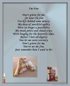 Pet Loss Poetry & Pet Loss Cards by Winnie Rogers Back To Work Quotes, Surgery Prayer, Pet Poems, Pet Loss Grief, Grieving Quotes, Memories Quotes, Pet Life, Dog Memorial, Fox Terrier
