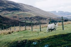 That Kind Of Woman · rachapun:   Scottish Highlands