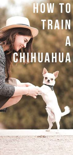 Effective Potty Training Chihuahua Consistency Is Key Ideas. Brilliant Potty Training Chihuahua Consistency Is Key Ideas. Chihuahua Puppies, Cute Puppies, Dogs And Puppies, Chihuahua Facts, Husky Puppy, Chihuahuas, Doggies, Training Your Puppy, Dog Training Tips