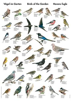 Exclusive nature posters with fish, birds, plants, and wildlife
