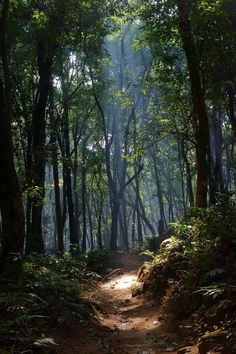 19 New ideas landscape photography forest pathways Forest Landscape, Landscape Art, Landscape Paintings, Landscape Photography, Nature Photography, Landscape Edging, Landscape Lighting, Aerial Photography, Night Photography