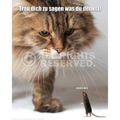 Poster: Verpiss Dich Katze online te koop. Bestel je poster, je 3d filmposter of soortgelijk product Deco Panel 40x50