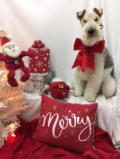 Merry Christmas..... Wire Haired Terrier, Wire Fox Terrier, Fox Terriers, Welsh Terrier, Terrier Puppies, Christmas Animals, Christmas Cats, Merry Christmas, I Love Dogs