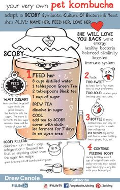 "Kombucha is an all natural health beverage chockfull of probiotics and other healthy amino acids. Probiotic literally means ""for life"". Unlike antibiotics, which kill ALL of the bacteria in your body, even the good stuff, probiotics re-establish the natural ecology of the intestinal flora. Probiotics are said to boost immunity, enhance mood, fight allergies, detoxify the body and rid the body of disease."