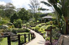 Másnap reggel a büféreggelit követően van még időnk sétálni a Le Meridien Fisherman's Cove kertjében, megállni, gyönyörködni a kertész által megálmodott szebbnél szebb növény variációkban. A hotel előtti partszakasz már a Beau Vallon Bay része, így akár hosszú sétákat is tehetünk a fehér homokos parton, és... Seychelles, Coven, Garden Bridge, Marvel, Outdoor Structures, Island, Islands