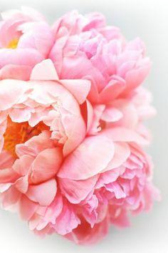 Peonies…one of my favorite flowers!