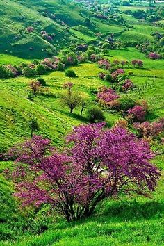 spring in the valley