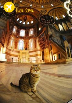 Is a kitten who comes to the Hagia sofya mosque. :)