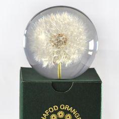 Dandelion Paperweight by Hafod Grange - The Quiet Farm - Purveyors Of Good