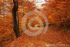 Forest Trail Covered With Brown Leafs Stock Photo - Image of trail, dirt: 35449572 Forest Trail, Forest Road, Mountain, Leaves, Autumn, Celestial, Stock Photos, Brown, Cover