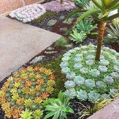 Succulent landscaping in cool spirals! Succulent landscaping in cool spirals! Succulent Landscaping, Succulent Gardening, Cacti And Succulents, Front Yard Landscaping, Planting Succulents, Propagate Succulents, Mulch Landscaping, Cacti Garden, Simple Landscaping Ideas