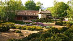 In a beautiful mountain area, in the Madrid mountain range, this garden was adapted to the landscape and to the naturally acid soil by planting a few carefully chosen species: birches, that blend well with the typical trees in the area and contrast with the dark green foliage of the organic yew hedge and a plantation of perennials that mixes China pinks, heathers, lilies and Stachys bizantina 'Silver Carpet' (lamb's ears) with felty silver-grey leaves.