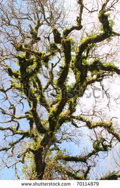 stock photo : crown of high tree on sky background