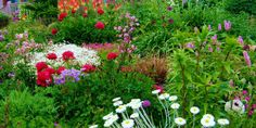 Keldaberg gardens in Shetland, Scotland, boasts beautiful floral scenes with an array of various exotic flower varieties to wow all