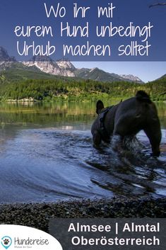 Urlaub mit Hund im Almtal, Oberösterreich Travel report about Almsee, Großer & Kleiner Ödsee and the Almfluss in the Almtal in Upper Austria. Backpacking Boots, Camping And Hiking, Outdoor Camping, Camping Site, Travel Report, Hiking Routes, Dog Travel, Best Investments, Your Dog