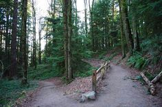 wildwood trail - portland, oregon's forest park 30 miles total. Start at Pittock Mansion or at Audubon Sanctuary.