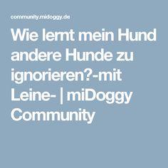 Wie lernt mein Hund andere Hunde zu ignorieren?-mit Leine- | miDoggy Community