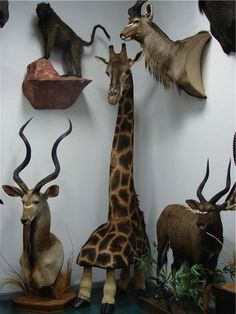 The taxidermy: | 13 Examples Of Taxidermy Gone Terribly Wrong