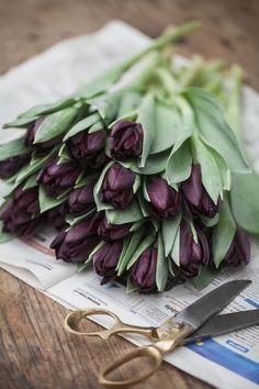 Idag är det tulpanens dag, älskar denna underbart anspråkslösa blomma. Sällan kan man väl köpa en bukett så billigt som under tulpansäsongen. Tulpanernas ankomst ger verkligen längtan efter vår och man vågar tro på en ny trädgårdssäsong. Tulpaner säljs verkligen överallt under våren men jag