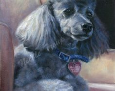 Grey TOY POODLE art PRINT signed by artist Nicole Troup, toy poodle painting, Giclee print Poodle, grey toy Poodle fine art, custom dog art
