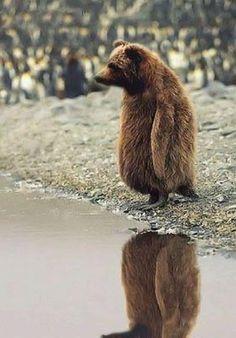 Russische Pinguin.
