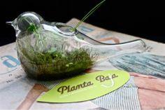 Colección Transparencia, Sabiduría. Serving Bowls, Tableware, Plants, Mixing Bowls, Dinnerware, Bowls, Dishes, Place Settings
