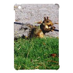 Squirrel By The Road iPad Mini Cases