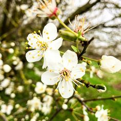 Comme un air de printemps  #spring #sunday #flowers #bloom #nature #inspiration #apointun #agencecreative