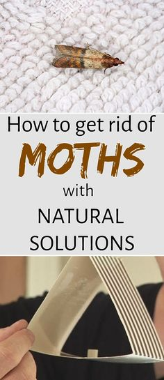 How to get rid of moths with natural solutions - myCleaningSolutions.com