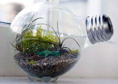 Tiny Terrarium | 20 Brilliant Ways to Repurpose Lightbulbs