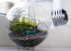 Fonte: The Hipster Home http://thehipsterho.me/2010/01/how-to-make-a-tiny-terrarium-in-a-light-bulb/