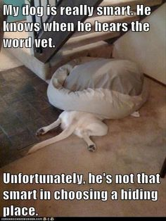 What's your #dog's favorite hiding place?