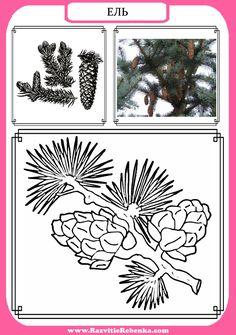 Diy And Crafts, Paper Crafts, Montessori Materials, Scandal Abc, Reggio Emilia, Science For Kids, Coloring Sheets, Kindergarten, Fruit