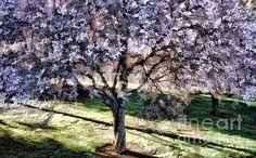 Tree in full bloom Digital Art