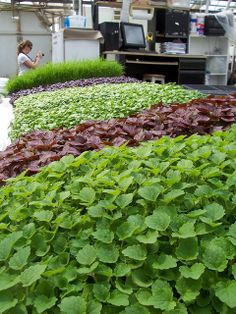 Photo: Microgreens – You can try this yourself