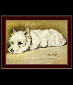 Vintage Early 1900's English Westie Art Reproduction Print