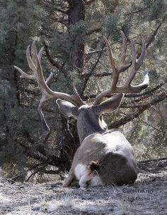 My heart is pounding already! Just think if I had my crosshairs on this bad boy!