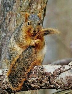 I Got A Tangle Cute Squirrel Baby Squirrels Art