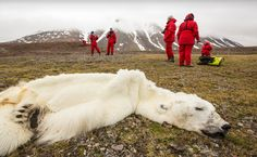 <p>This photo taken by Ashley Cooper features a polar bear who has starved to death as a consequence of climate change.</p>