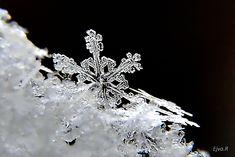 https://flic.kr/p/QRJKzp | Snowflake / Hópihék | crystal eiskristall hó hópihe ice jégkristály macro makro schnee schneeflocke snow snowflake tél winter