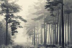 David Baker, March Trees, 2012 / 2013 © uk.lumas.com/ #Lumas