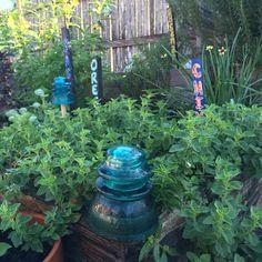 Herb garden fall 2015