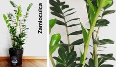 Plantas de interior s per f ciles y agradecidas de cuidar - Plantas interior resistentes ...