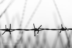 Barbed Wire by AbZoLute