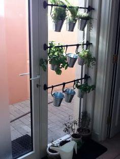 Grow a Home Herb Garden