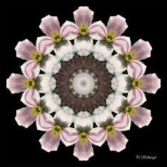 Mandala ''Clematis''  von KreativesbyPetra  #mandala #inspiration #entspannung #Clematis #blossom #blüte #natur #nature #innereruhe  #foto #photo #fotografie #naturfotografie #makro #makrografie #macro #macrophotography #garten #garden #sommer #summer #Spiegelung #Reflexion #photoshop #canon #canonEOS Clematis, Petra, Photoshop, Floral Wreath, Inspiration, Canon, Home Decor, Mandalas, Nature Photography