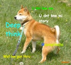 Shiba Confessions | The 30 Best Dogs Of 2012