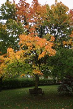 Autumn in Molveno