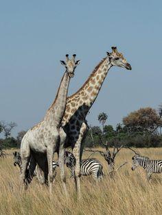 lucy-williams-fmn_botswana-safari-abu-camp-46